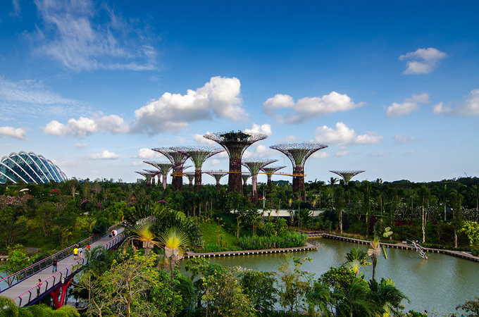 Singapore Supertrees, Gardens by the Bay, Singapore