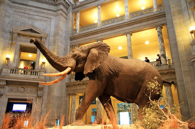 National_Museum_of_Natural_History-min